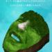 サントリーの「あなたの顔が森になる」面白キャンペーンが秀逸!?その不思議なスマホサイトとは?!